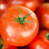 tomate close up