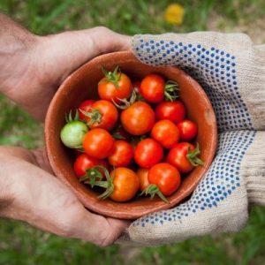 Le Jardin de Fabie offre le service de livraison de légumes en ville. Informez-vous des possibilités.